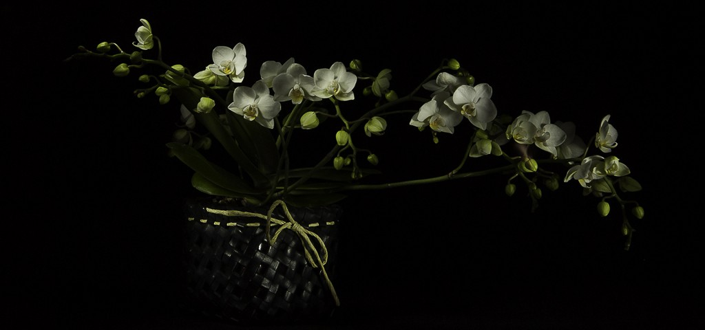 _DSC0254-HD crop